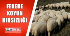 Feke'de Koyun Hırsızlığı