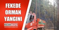 Feke'de Orman Yangını 20 Dönüm Alan Yandı