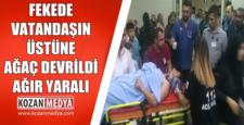 Feke'de Üzerine Ağaç Devrilen Vatandaş Ağır Yaralandı