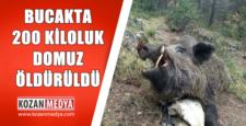 Kozan Bucak Mahallesinde 200 kiloluk Domuz Vurdular