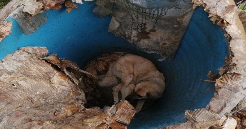 Kozanda Çukura Düşen Köpek Kurtarıldı