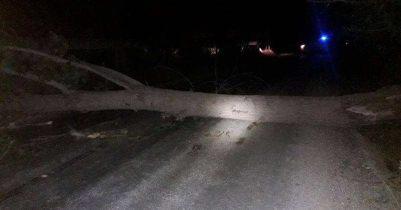 Kozanda Rüzgar Etkili Oldu Ağaçlar Devrildi, 10 Dekar Ekin Yandı