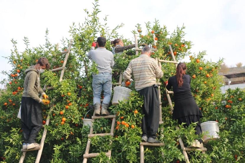 Asgari Ücretin Yükselmesi İle Beraber Tarım İşçi Yevmiyesi Yükselmeyecek mi