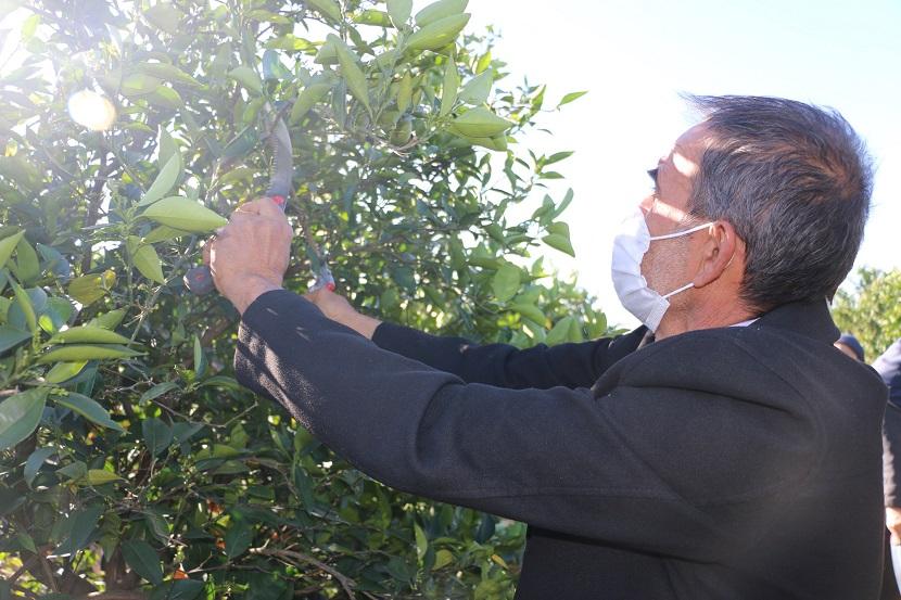 Kozan'da 32 Kişiye Meyve Budama Kursu Verildi