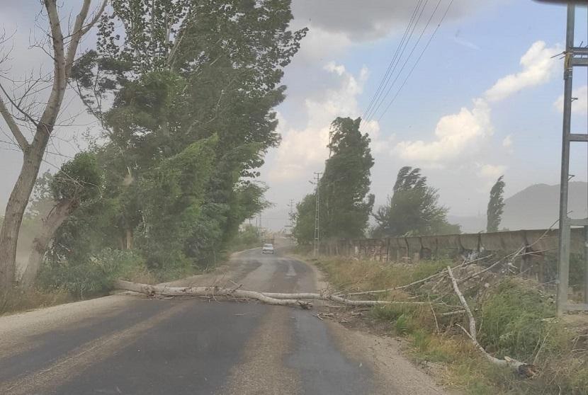 Kozan'da Fırtına Yola Ağaç Devirdi