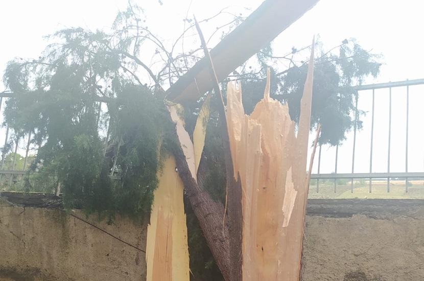 İmamoğlu'nda Fırtınada Okul Bahçesinde Ağaçlar Yıkıldı